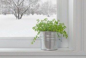 растение зимой