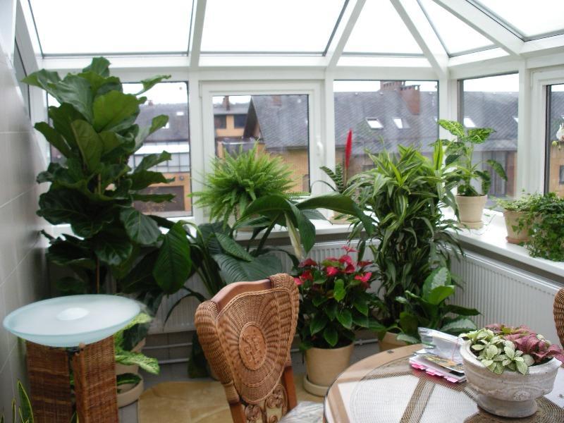 Зимний сад в частном доме: фото, конструкция, отопление, осв.