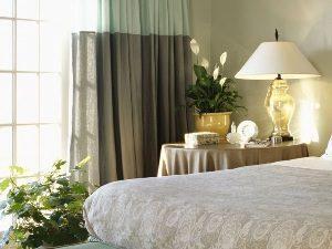 Комнатные для спальни цветы – секреты правильного выбора