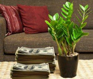 Замиокулькас и деньги