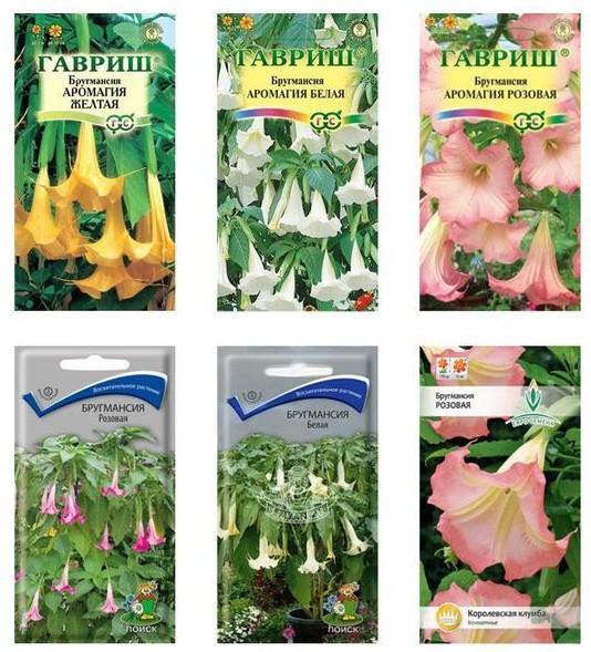 Семена бругмансии