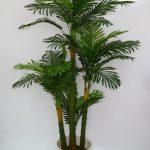 Финиковая пальма в домашних условиях уход
